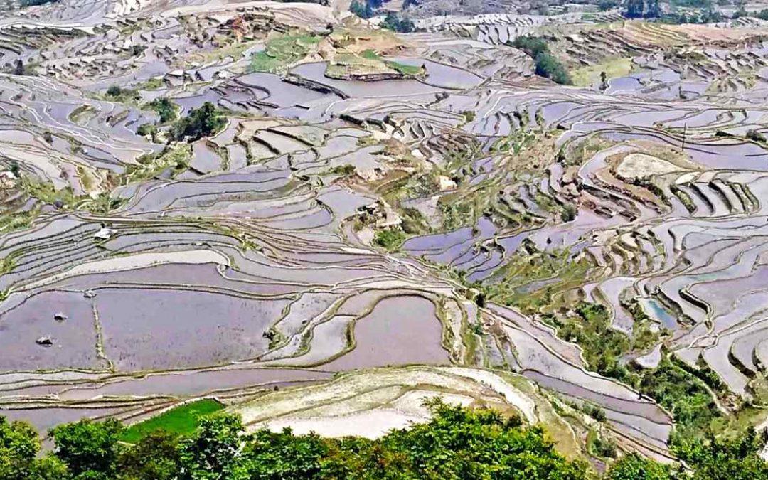 Yuanyang terraces, a wonder of man and nature